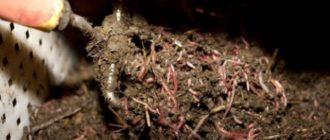 биогумус для рассады