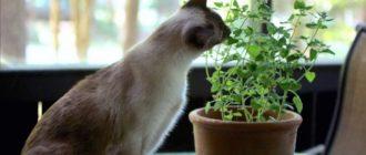защитить рассаду от кошек