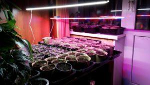 Как пользоваться фитолампой при выращивании рассады
