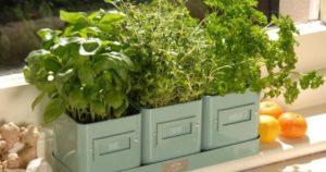 Как вырастить зелень на подоконнике в квартире зимой