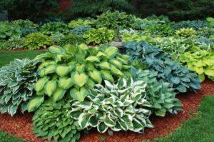 Место растения в саду