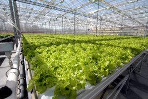 Как построить теплицу для выращивания овощей на круглый год