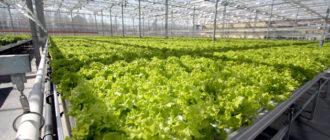 Теплица для выращивания овощей круглый год: как построить
