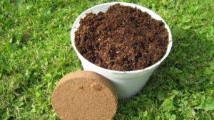 Как правильно использовать кокосовый субстрат для рассады