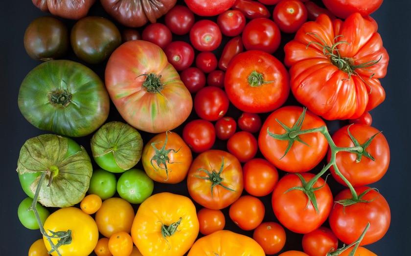 томаты для теплицы