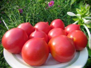 Лучшие раннеспелые сорта томатов для открытого грунта