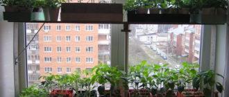 парник на окне