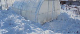 накидывать снег в теплицу