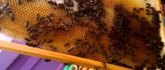 облет пчел в теплице