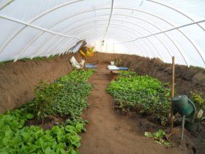 Подземная теплица для круглогодичного выращивания своими руками