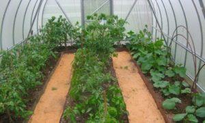 Совместимость овощей в теплице из поликарбоната