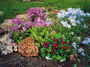Выращивание примулы из семян в домашних условиях