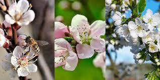 почему яблоки не плодоносят причины